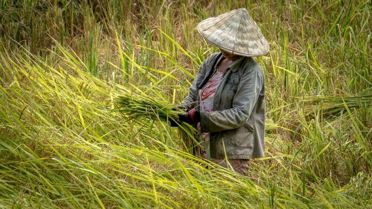 田んぼの溝切りの理由と方法と溝切り機について【水稲栽培】
