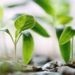 野菜・園芸用育苗ポット