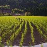 田んぼの水路やU字溝の補修におすすめのアイテム