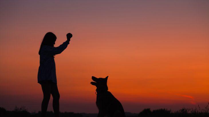 亡くなった大事なペットにペット用骨壷の動物別選び方とペット葬儀のおすすめ業者