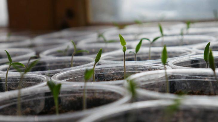 催芽ってなに?催芽とおすすめの催芽機