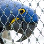 防鳥網は効果あります!効果がある防鳥網の選び方