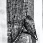 農業果樹用・マンション用おすすめ防鳥網