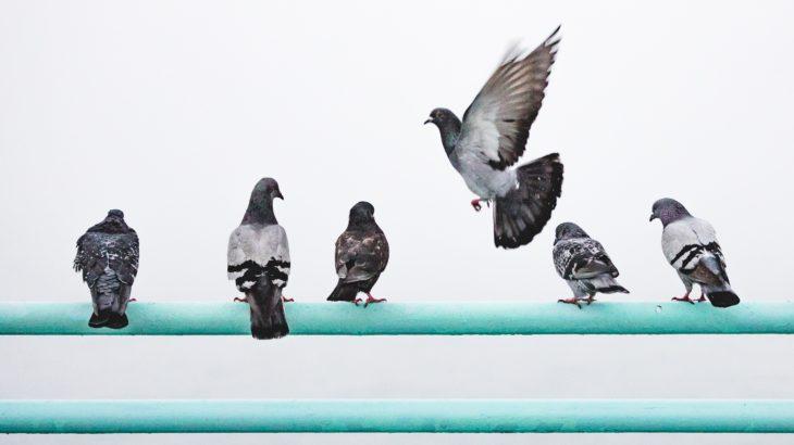 ベランダに来るハト対策とおすすめの防鳥アイテム