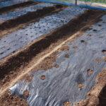 農業用マルチシートの種類と黒や透明の色別効果と選び方
