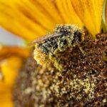 ビニールハウス内受粉を助けてくれる蜂・クロマルハナバチの失敗しない飼育法