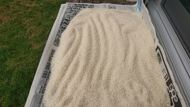 玄米や白米にわく虫たちの対処方法とおすすめアイテム