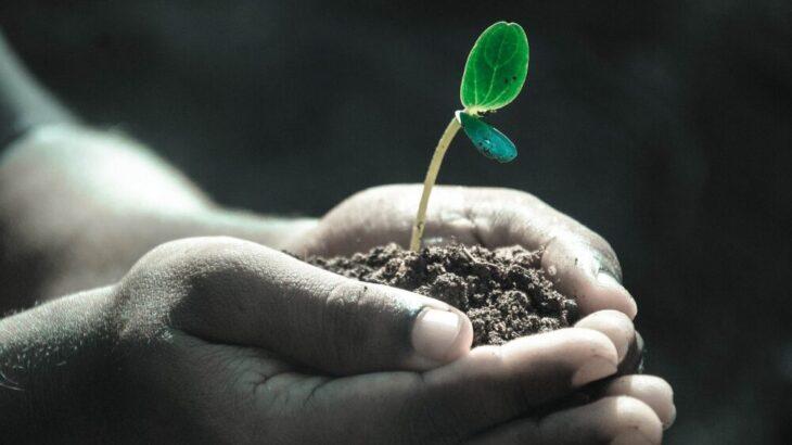 有機栽培農業に使える木酢液・竹酢液そして葉活酢の効果や使い方まとめ